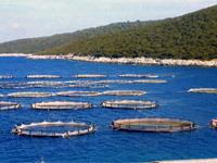 Применение на рыбохозяйствах